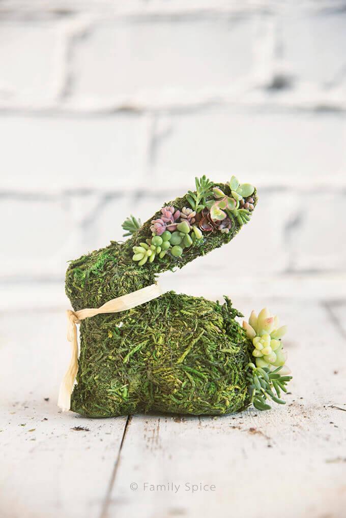 succulent moss bunnies
